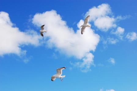 Vogels zijn gevlogen in zomervakantie